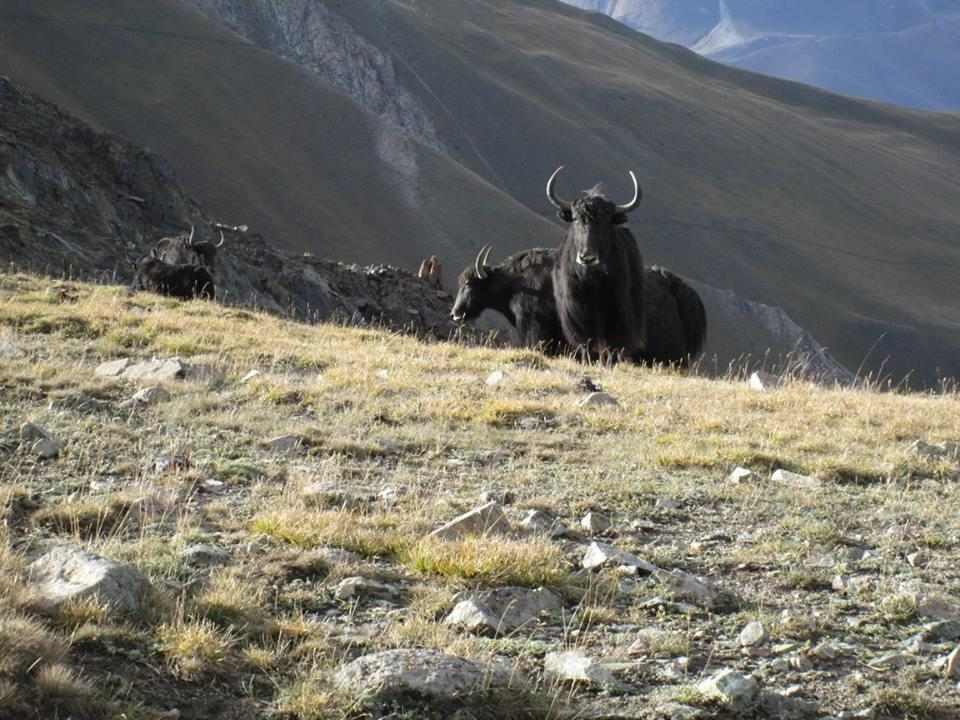 kirgizstan tome1
